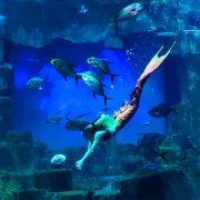 aquarium-paris-trocadero